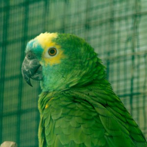 nucleo_zoologico_el_bosque_amazona_2