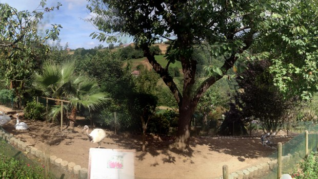 nucleo_zoologico_el_bosque_pavos