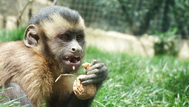 charla primates